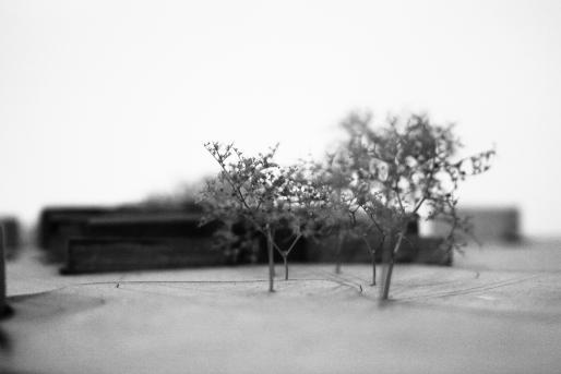 Promenade with row of trees